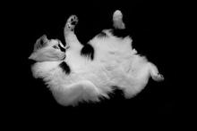 ゆめたま SENSE OF わんDER-cat