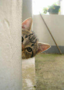 SENSE OF わんDER-cat striped