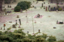 SENSE OF わんDER-graves