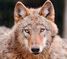 SENSE OF わんDER-wolf