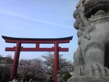 |ホリスティックセラピーサロン・ゆめたま|NLP・バッチフラワーレメディ・ドッグヒーリング・こどもカウンセリング|鎌倉駅より徒歩8分